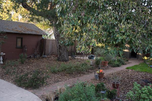 Mulch under oak