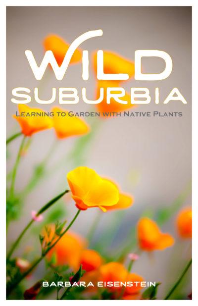 Wild Suburbia_cover