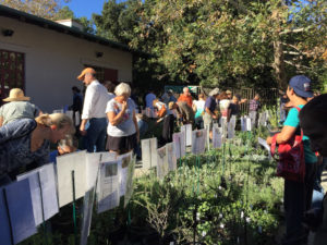 CNPS Native Plant Sale
