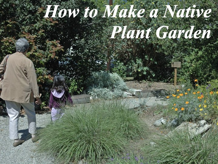 How-to Make a Native Plant Garden