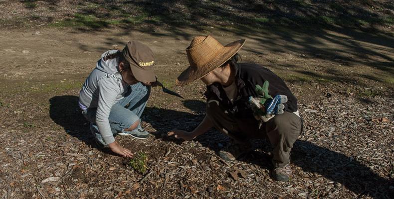 Gardeners Planting